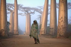 Малагасійка серед баобабів