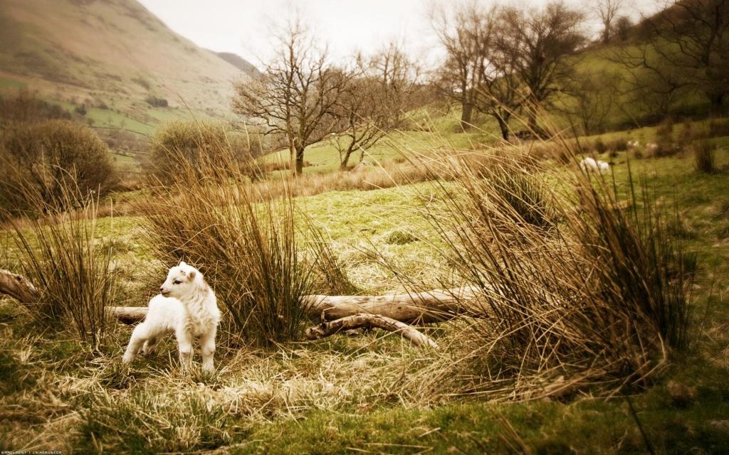 Шукайте загубленої овечки