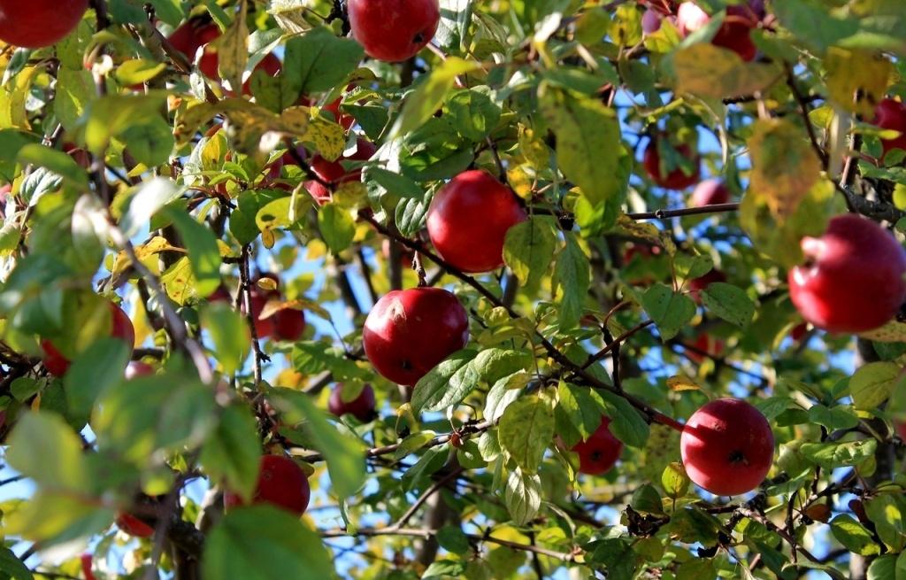 Осіння зустріч у яблуневім саду