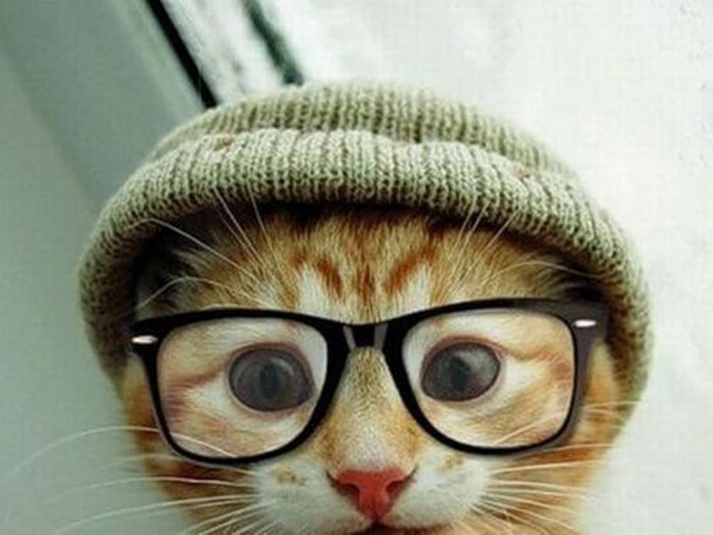 Хіт мережі: як коти реагують на відео про себе самих (відео)