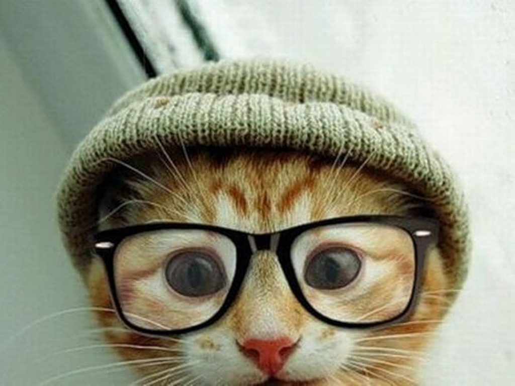 Кумедні коти (Частина 4)