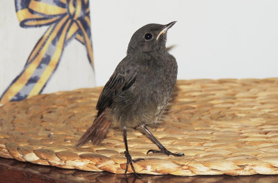 Пташок із червоної рукавички