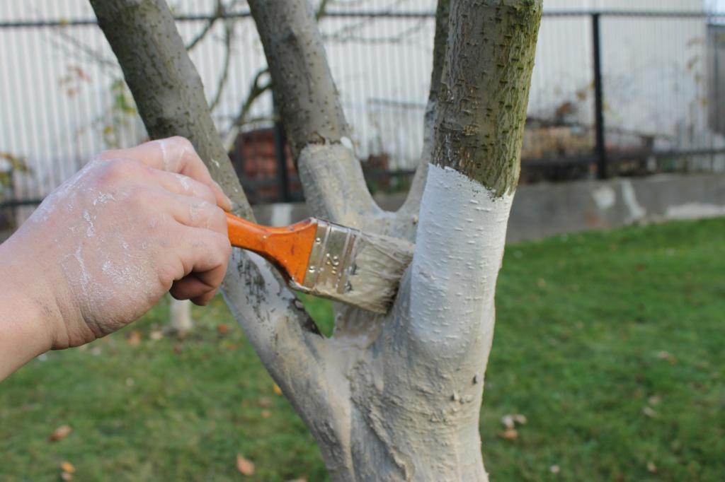 Час білити дерева