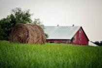 trava-tyuk-soloma-leto-ferma