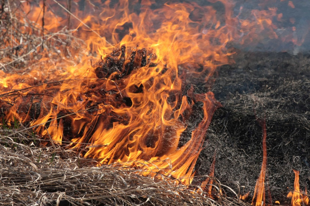 Через масштабну пожежу ледь не згорів авторинок