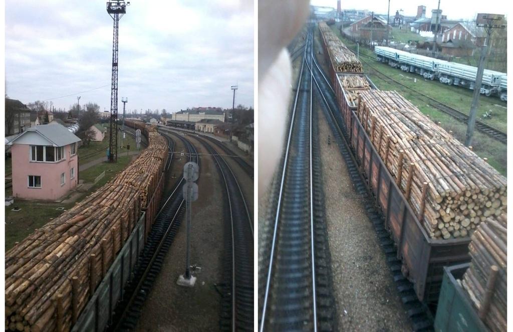 """У Коломиї – 11 вагонів з деревиною на експорт. Є тернопільський """"слід"""""""