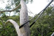 Tree_Bracing