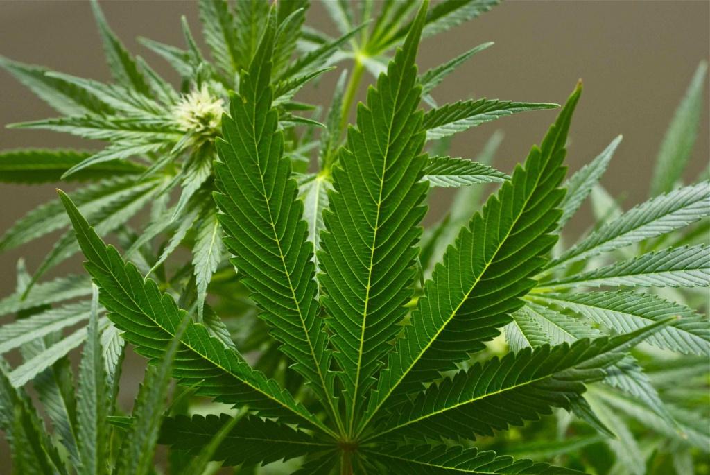 Засудили контрабандиста наркотиків