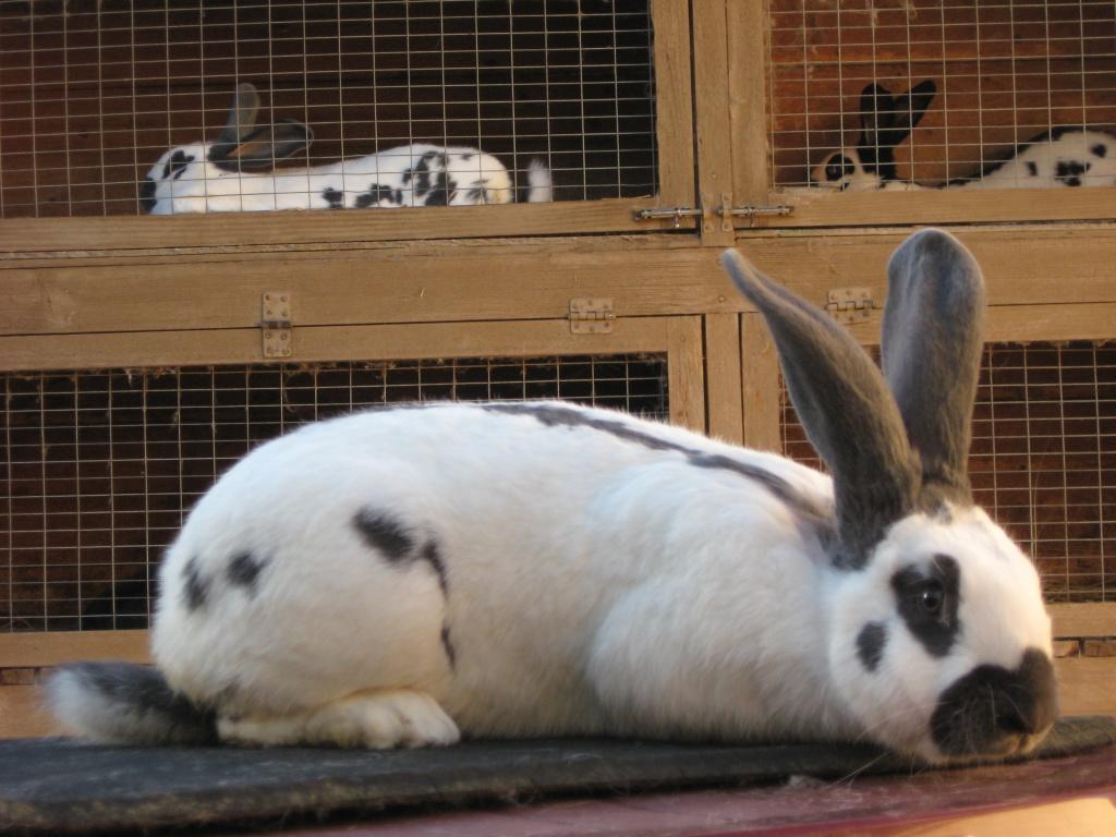 Доглядаємо за кроленятами