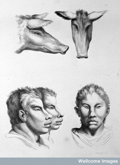 L0010072 The relation between the human physiognomy and that of the