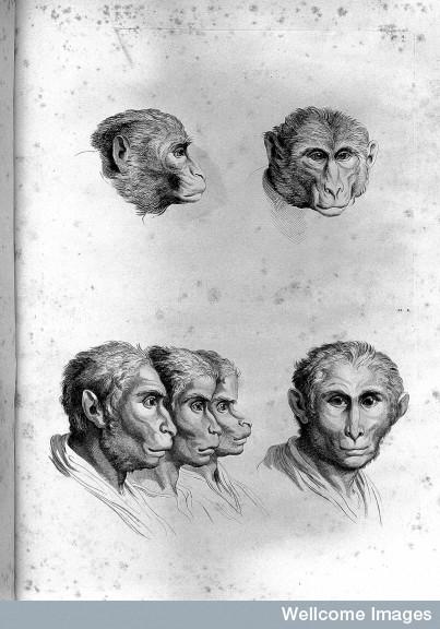 L0025874 C. Le Brun, Dissertation sur un traite de C.