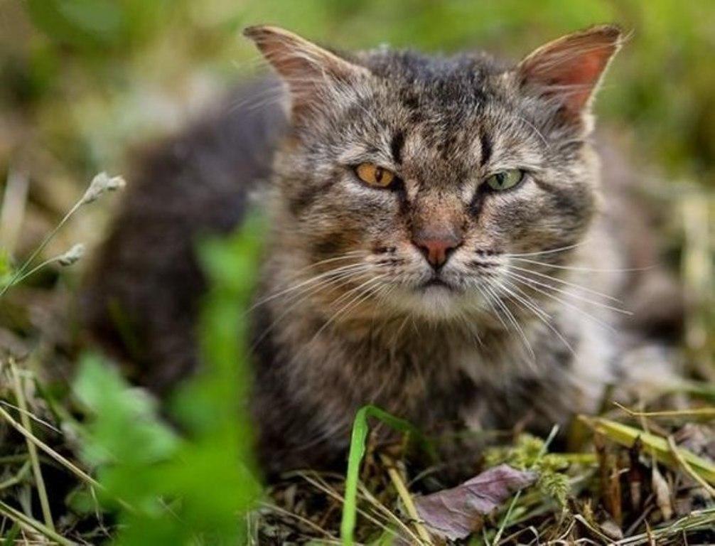 Вуличні коти