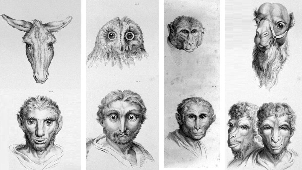 Якби предками людини були… різні тварини