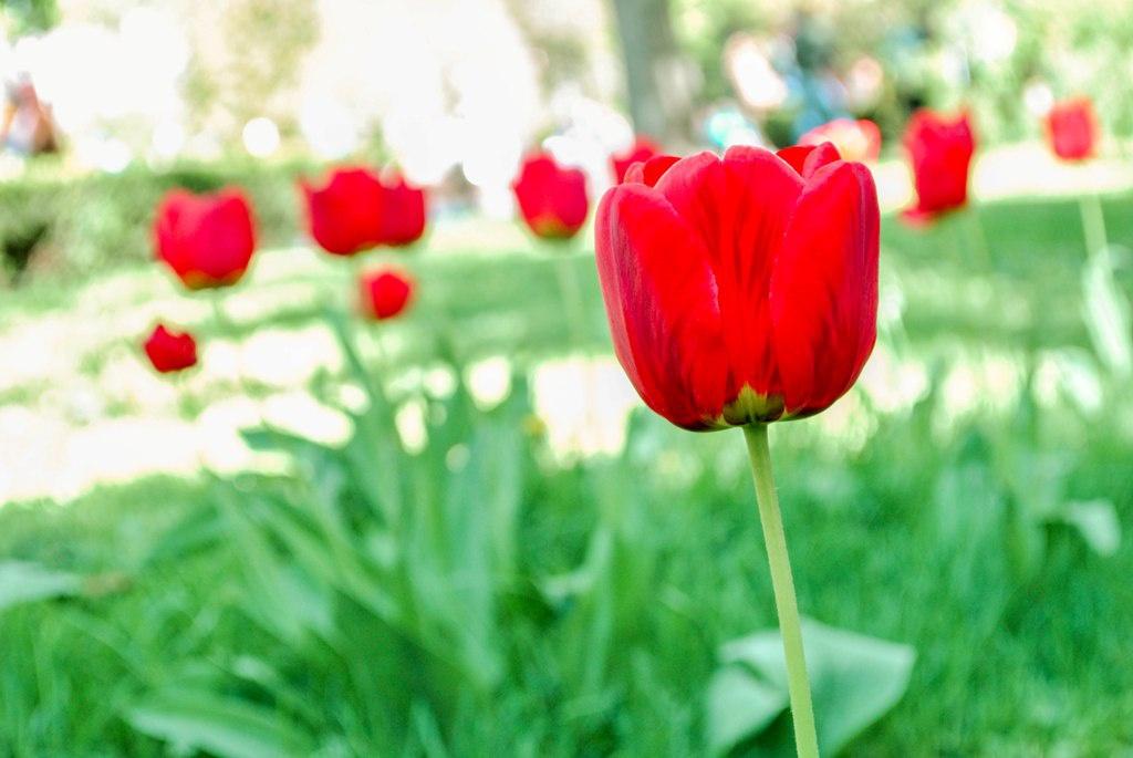 Тернопіль у цвіту