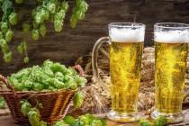 hmel-v-bezalkogolnom-pive