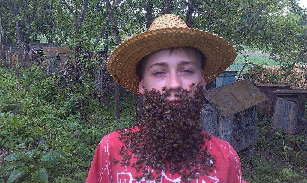 Із бджіл — мед, молочко, віск і… борода