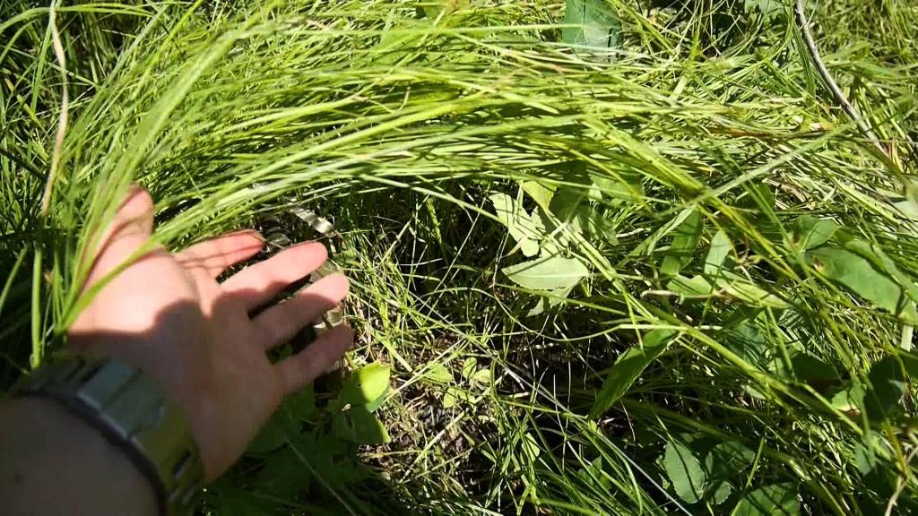 Літня жінка підірвалася на розтяжці в Луганській області
