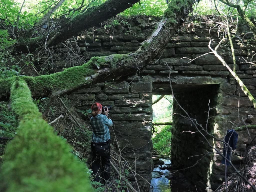 Таємниця Василькової долини