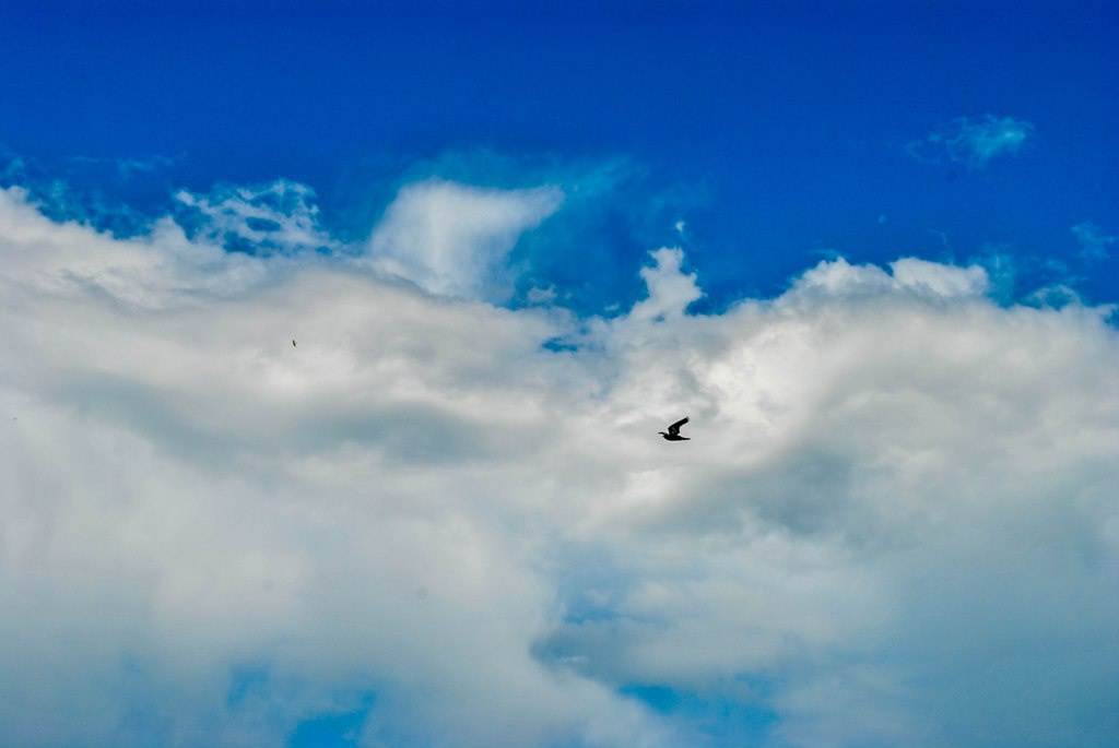 Тернопільське небо, голуби і 125 хвилин