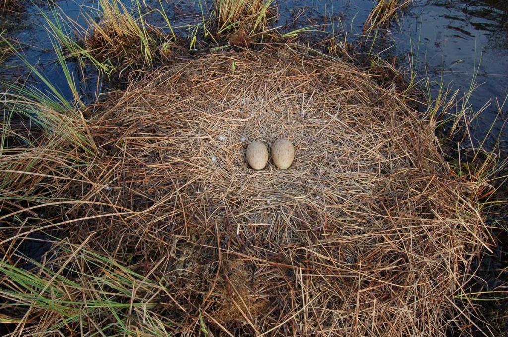 Ніби пташка над покинутим гніздом