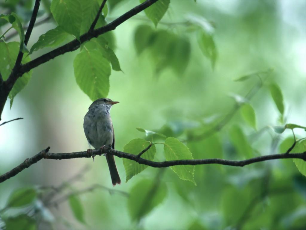 kartinki24_bird_0014_2