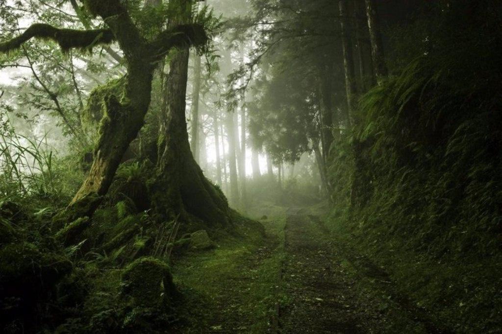 Ліси, у яких хочеться загубитися