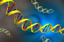 Nucleic, acid, dna, днк, 2800x2100