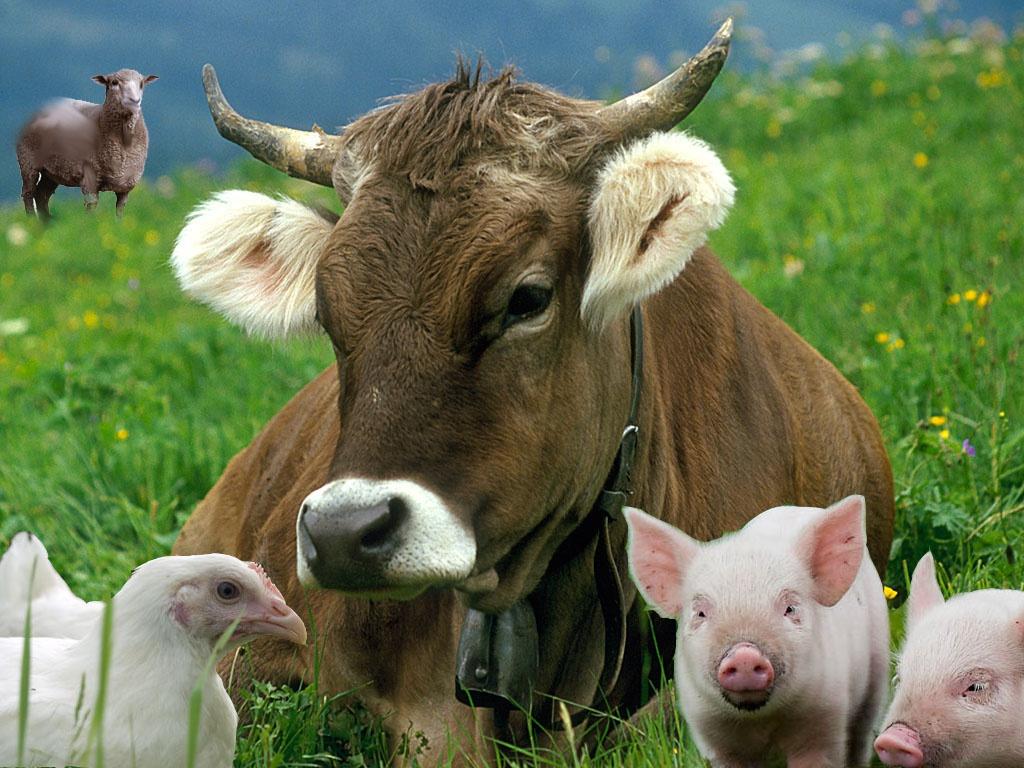 Самі свинку вигодували, самі м'ясо продали, — то й податки не платіть
