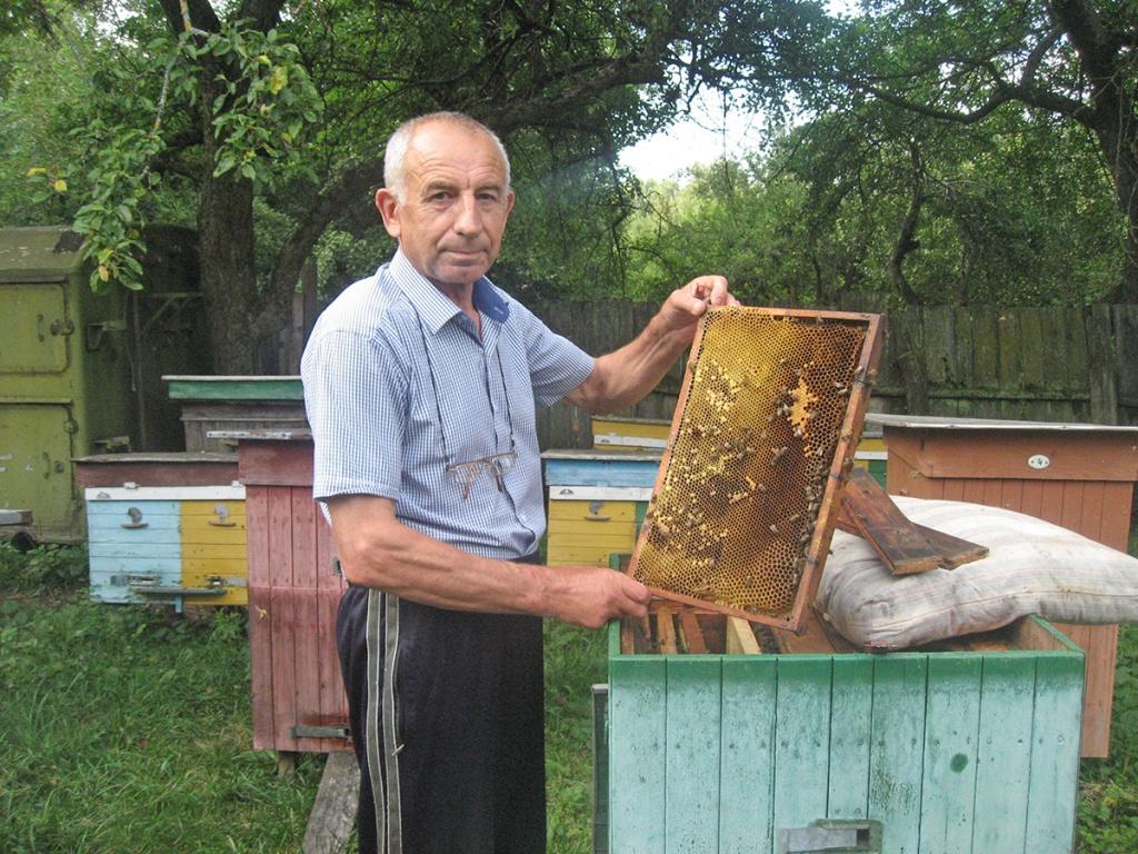 Із тих дібров, що Лозинський ростив. Щедро віддячують бджілки колишньому лісівникові за зеленії шати