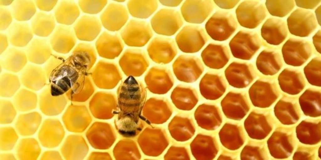 Бджола розумніша, ніж комп'ютер!