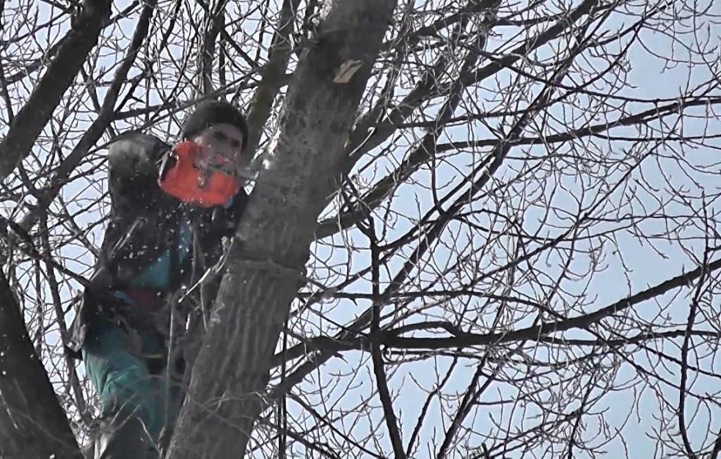 Тернополяни проти санітарної обрізки дерев