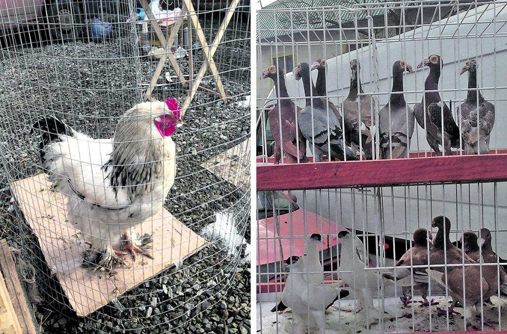 Пташиний рай у Чорткові