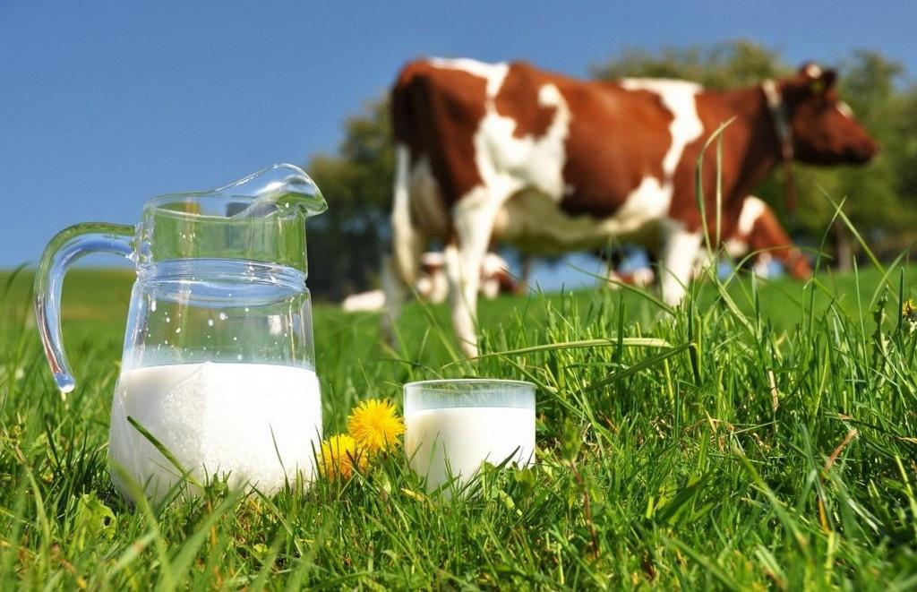 Підприємствам дозволили продовжити прийом домашнього молока