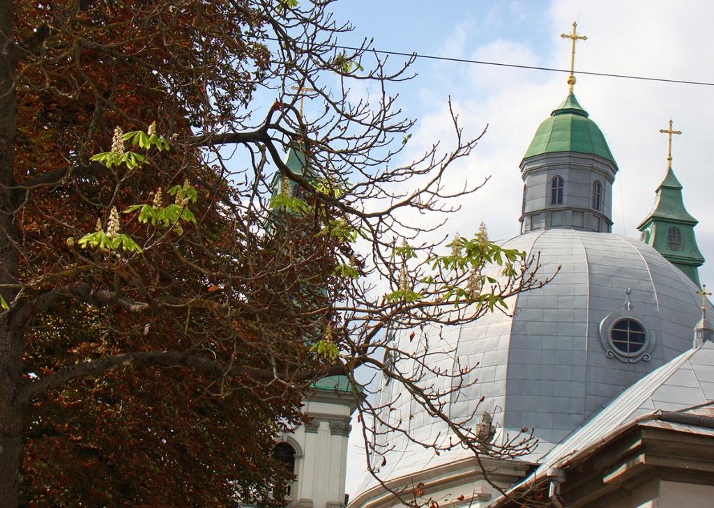 До Дня Незалежності в Тернополі зацвіли каштани