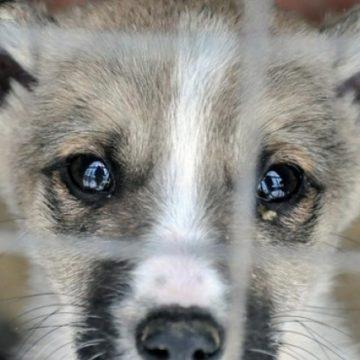 Відповідальність за жорстоке поводження з тваринами