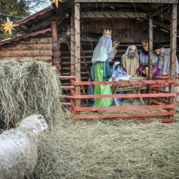 Вільне життя – Різдво в окопі
