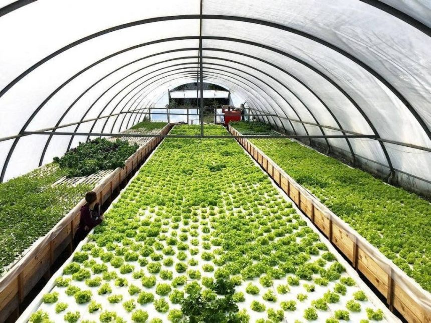 «Зелені» вітаміни від новаторів із Деренівки