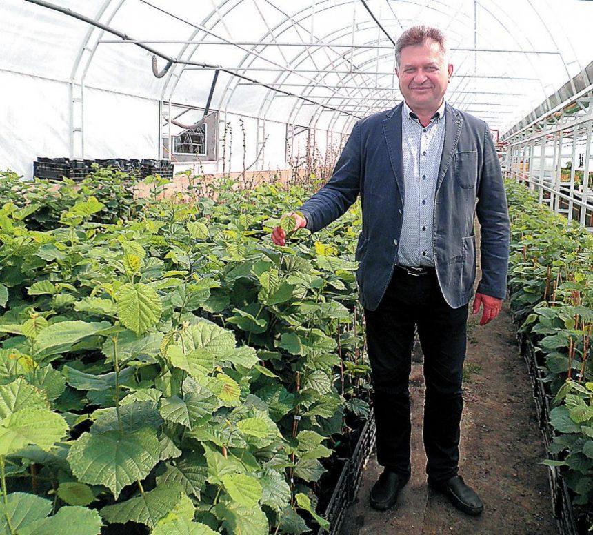 Незвичний сільський бізнес — вирощування фундука