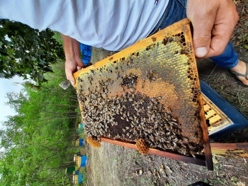 Чи солодко бджолярам?