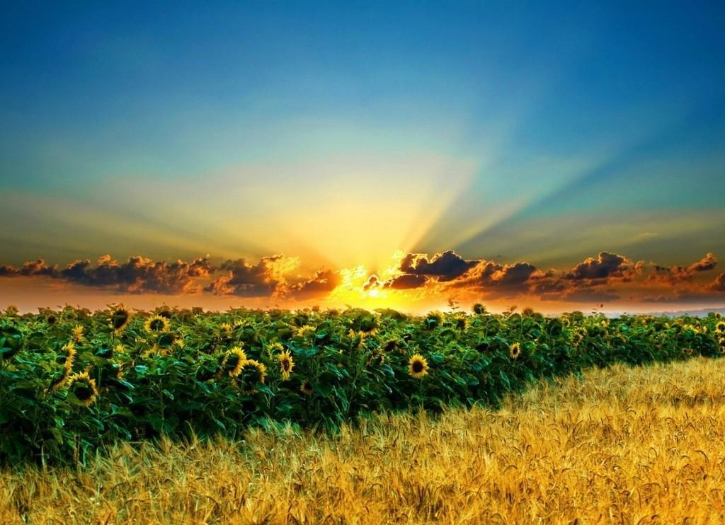 12 листопада у Верховній Раді буде розглянуто закон про землю