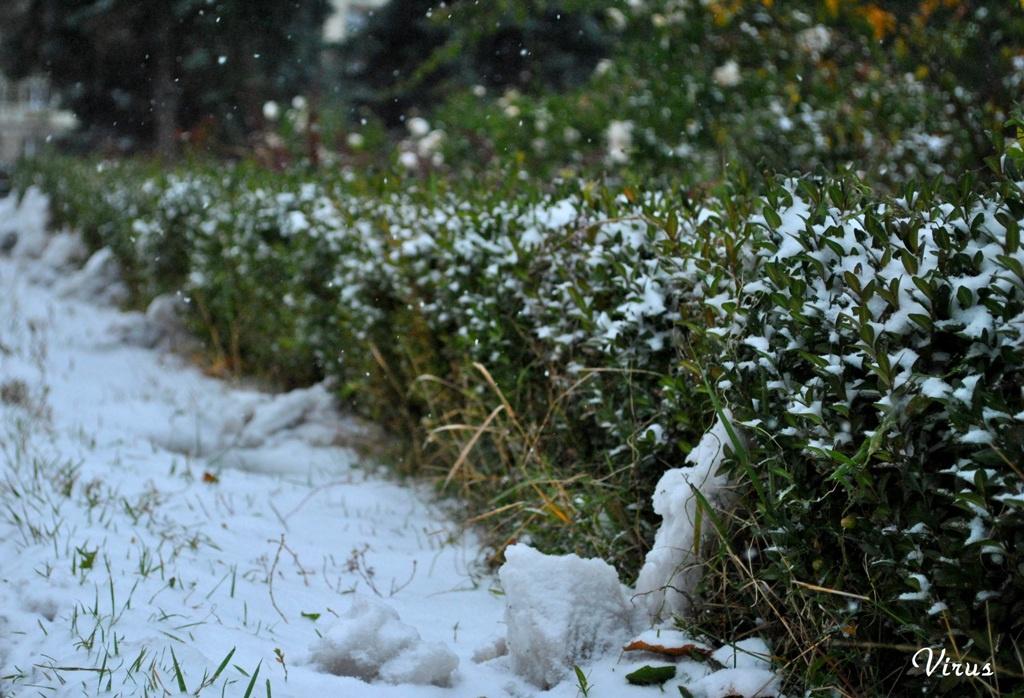 Сніг як подарунок під ялинку