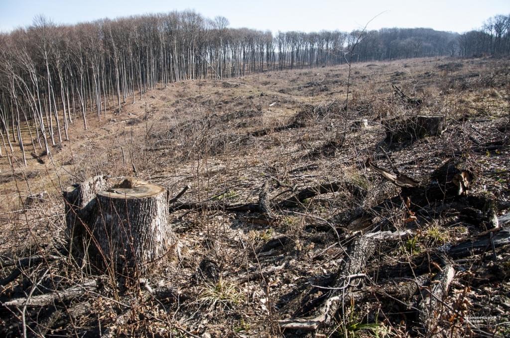 За розкрадання лісу відповідатимуть перед судом