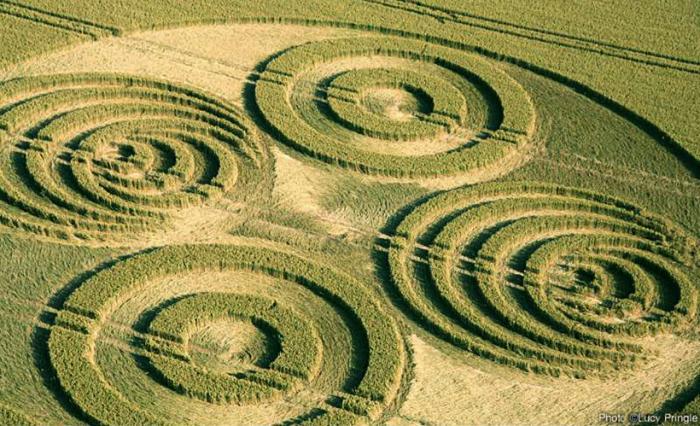 Нерозгадані таємниці на пшеничних полях