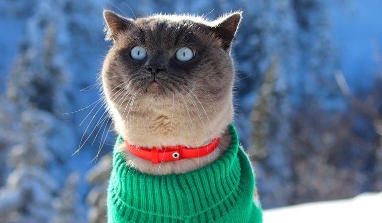 Тернопільський кіт-мандрівник